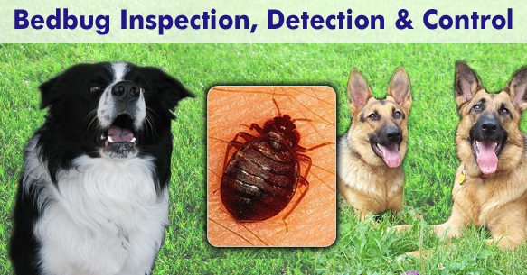 Bedbug inspection, detection and control