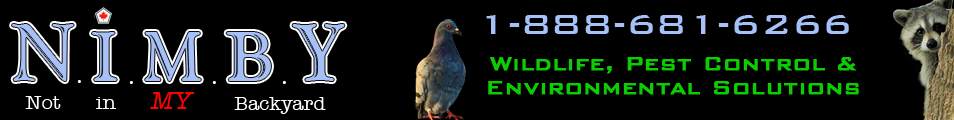 Nimby Wild, Pest Control and Environmental Solutions