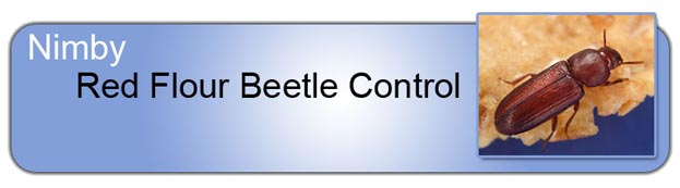 Red Flour_Beetle_Control_Header