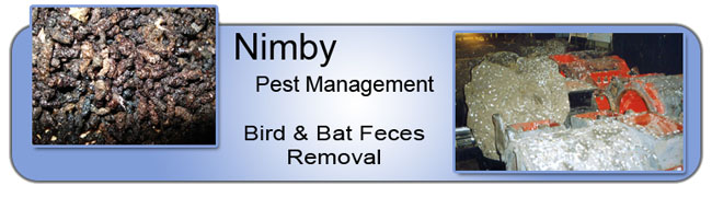 bird-bat-feces-removal